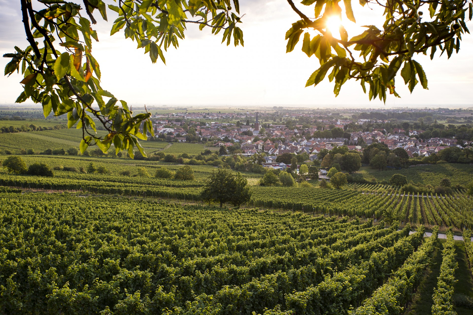 Gastro-Szene Deidesheim - Reportage